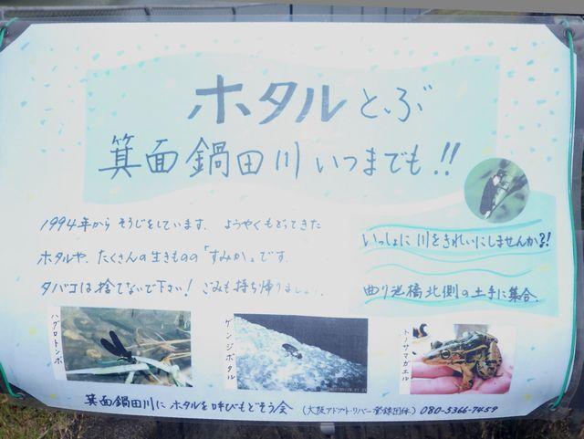 一級河川・箕面鍋田川の秋の花: 箕面里山のブログ